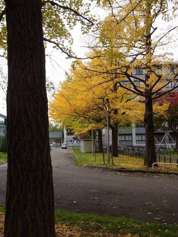 北海道大学からの贈り物 GiFT_c0025115_1848286.jpg