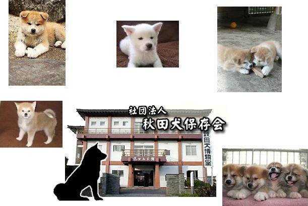 秋田犬保存会_d0070316_16533859.jpg