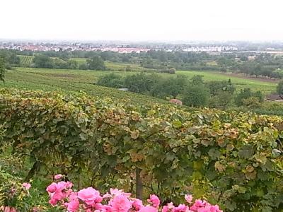 ++現地で出会ったドイツワインは美味++_e0140921_13415222.jpg