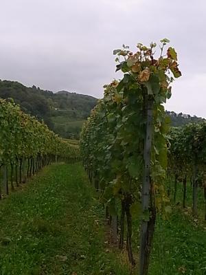 ++現地で出会ったドイツワインは美味++_e0140921_1341557.jpg