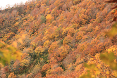 赤兎山 1629m   取立山 1307m 福井県_d0055236_23302667.jpg