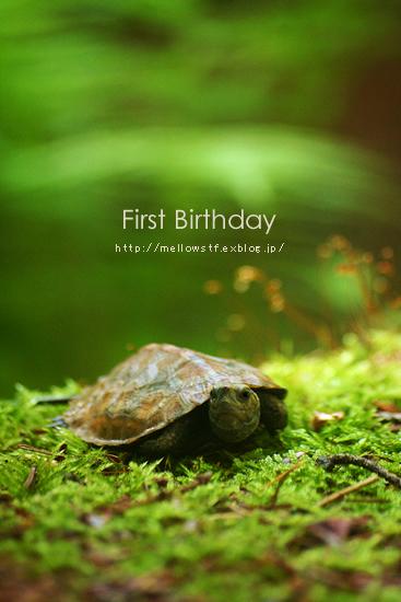一歳のお誕生日。_d0124248_20403670.jpg