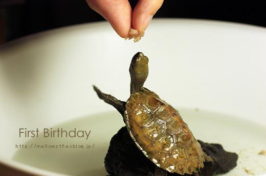 一歳のお誕生日。_d0124248_20473668.jpg