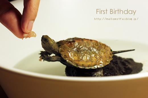 一歳のお誕生日。_d0124248_20491230.jpg
