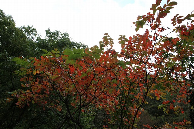 増富通仙峡の紅葉とみずがき湖の今・・・_b0100253_1630445.jpg