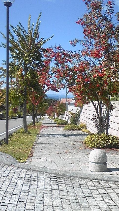 もう秋ですね~ヽ(´∀`)ノ_d0099965_14544842.jpg