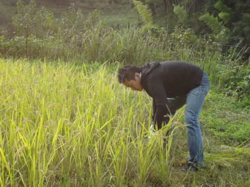 稲刈り2_c0169176_18495186.jpg