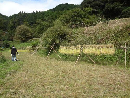 稲刈り2_c0169176_18495651.jpg