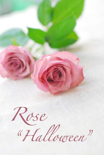 バラ*ハロウィーン_a0115684_293283.jpg