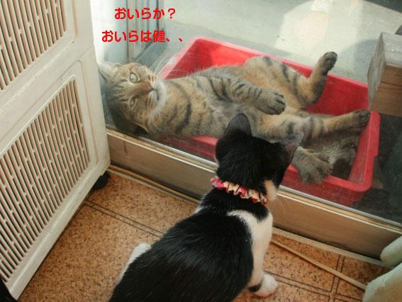 お茶目な健ちゃん/愛ちゃんの通院_d0071596_21415991.jpg