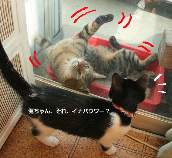 お茶目な健ちゃん/愛ちゃんの通院_d0071596_2142865.jpg
