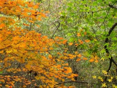 秋、真っ盛り!白州の台ケ原宿市_e0010418_17262381.jpg