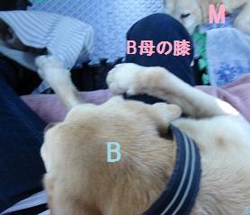 b0226221_18553544.jpg