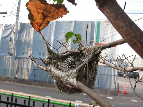 鳥の巣_c0162926_22312131.jpg