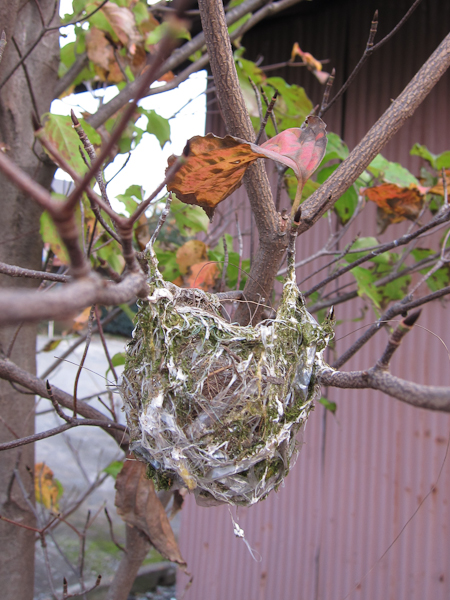 鳥の巣_c0162926_22312159.jpg