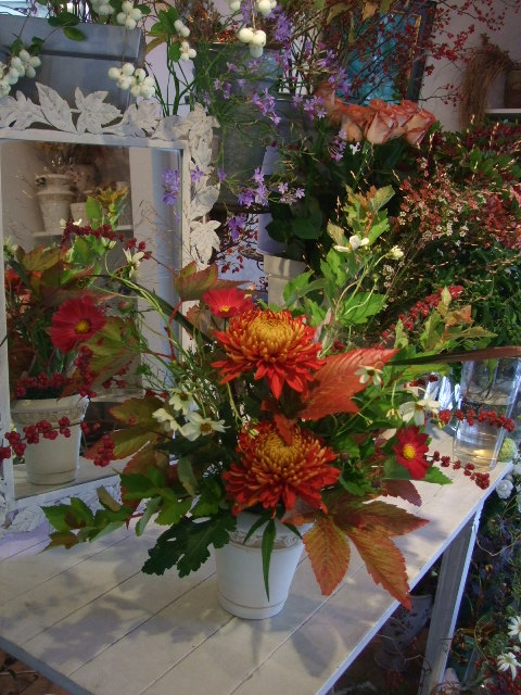 オークリーフ花の教室(赤いコスモス)_f0049672_17532610.jpg
