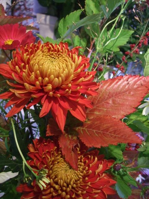 オークリーフ花の教室(赤いコスモス)_f0049672_180922.jpg