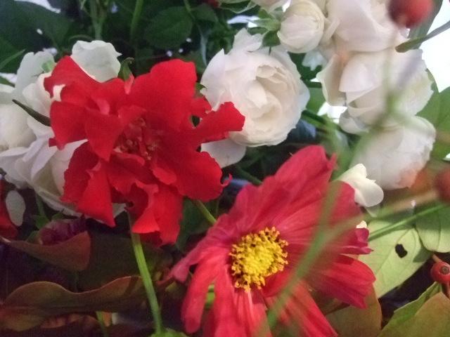 オークリーフ花の教室(赤いコスモス)_f0049672_1875933.jpg