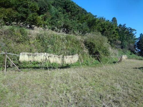 稲刈り3_c0169176_15284054.jpg
