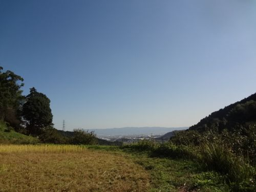 稲刈り3_c0169176_1528503.jpg