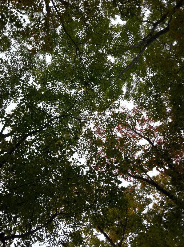 紅葉と音楽 ♪( ´θ`)ノ_e0097491_14441430.jpg