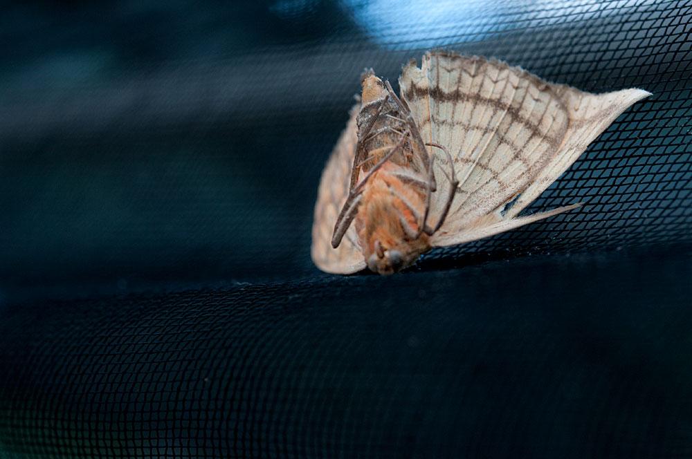 私設昆虫記-163 生と死の差分2011 _f0215695_19463039.jpg