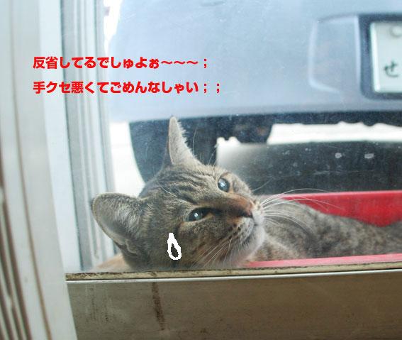 健ちゃんのパンチ;;_d0071596_19222949.jpg