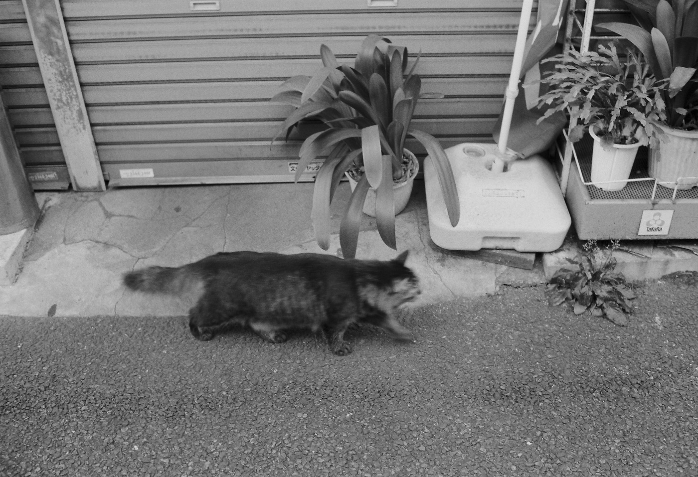 根津の猫、その3。_c0120903_2251174.jpg