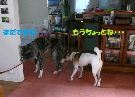 f0121712_14202575.jpg