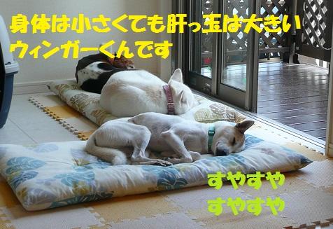 f0121712_1530578.jpg