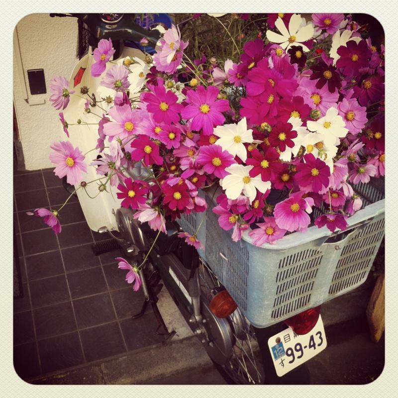 バイクに花が活けてある!_b0123314_129261.jpg