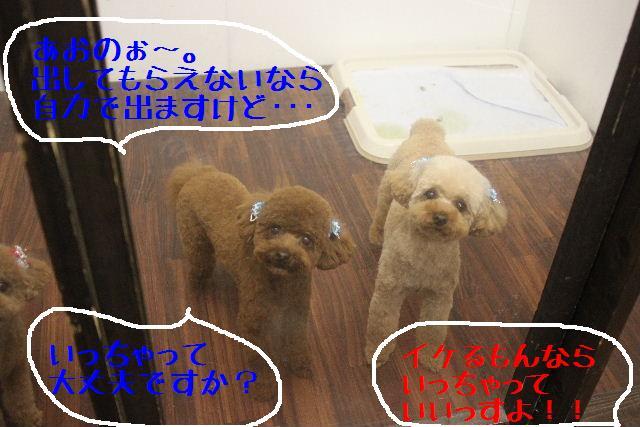 b0130018_22163815.jpg