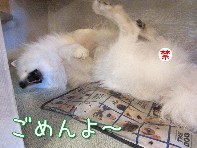 おさぼりモード_c0062832_681124.jpg