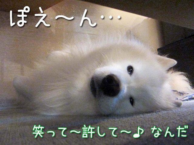 おさぼりモード_c0062832_681739.jpg