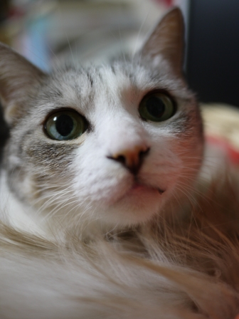 猫のお友だち マシャちゃん海くんメルモちゃん編。_a0143140_23384869.jpg
