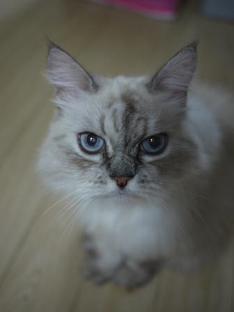 猫のお友だち マシャちゃん海くんメルモちゃん編。_a0143140_23391658.jpg