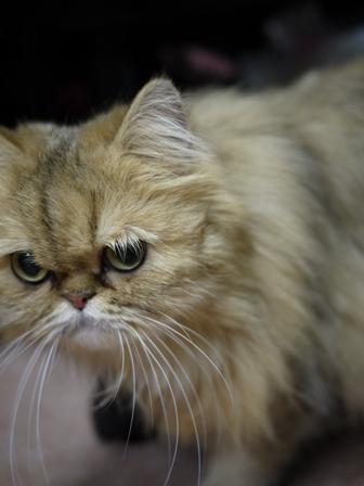 猫のお友だち マシャちゃん海くんメルモちゃん編。_a0143140_23395128.jpg