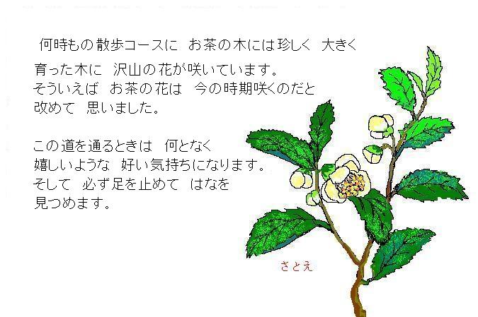d0083472_238984.jpg
