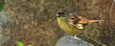 ★やってきた旅鳥、冬鳥たち_e0046474_18292418.jpg