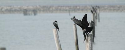 ★やってきた旅鳥、冬鳥たち_e0046474_22184363.jpg