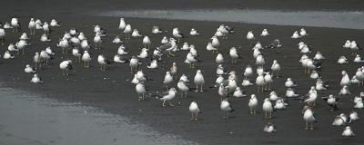 ★やってきた旅鳥、冬鳥たち_e0046474_22185740.jpg