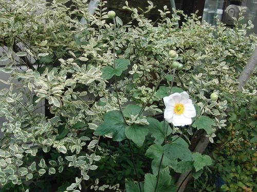 咲きました_b0205379_19374331.jpg
