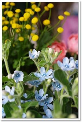 森の工房 お花の日!!_c0207890_242782.jpg