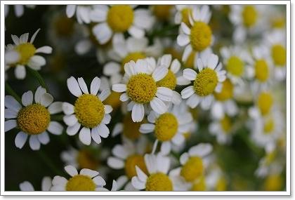 森の工房 お花の日!!_c0207890_243418.jpg