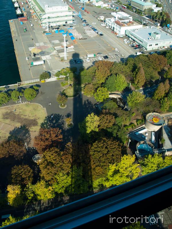 山下公園 ユリカモメ  2011/10/25_d0146592_1561451.jpg