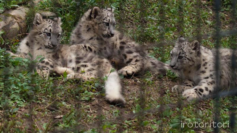 多摩動物園 イヌワシ  2011/10/27_d0146592_22535181.jpg