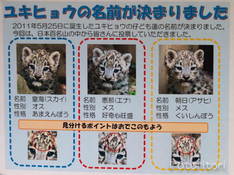 多摩動物園 イヌワシ  2011/10/27_d0146592_225552100.jpg