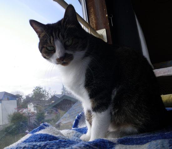 猫部屋のHuu♪_a0136293_16595346.jpg