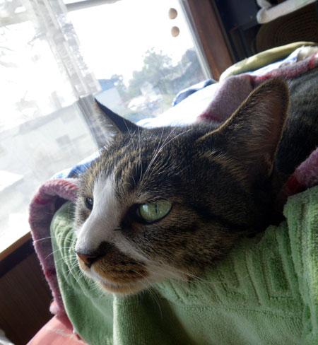 猫部屋のHuu♪_a0136293_1725833.jpg