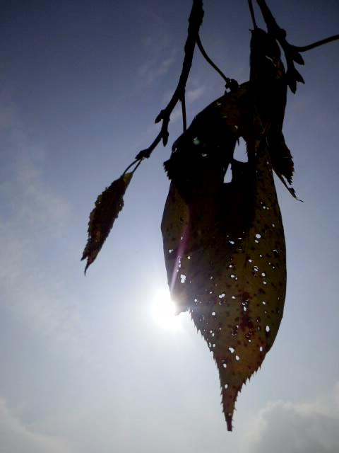 秋の、少々長すぎる散歩 #2_f0155808_014025.jpg